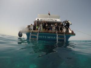 DIVING IN HURGHADA - WHITE WHALE DIVERS
